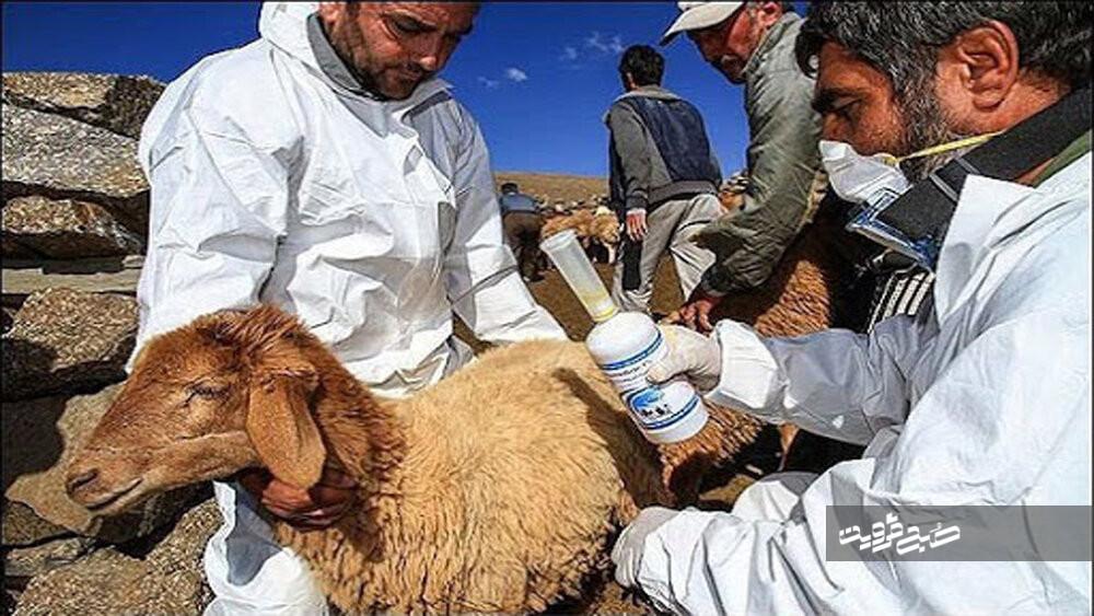 تب کریمه کنگو در کمین استان قزوین است