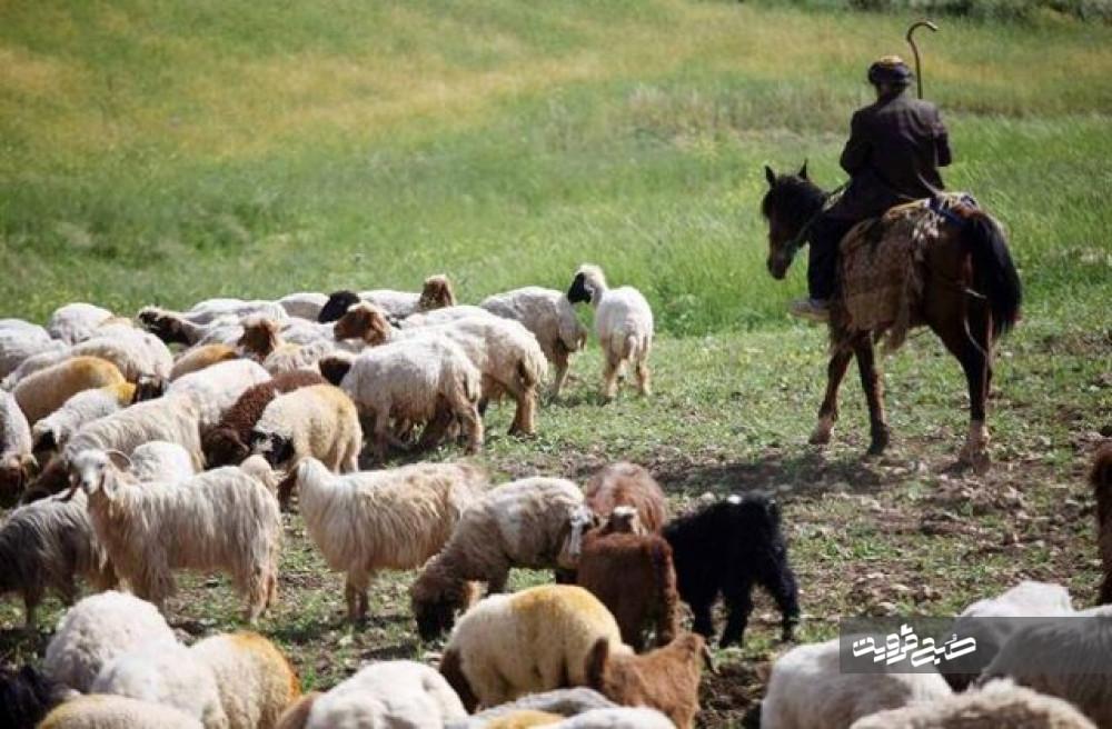۸۰۰ نفر از روستائیان قزوینی به صورت رایگان بیمه شدند