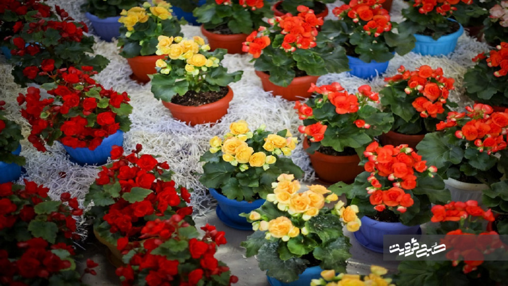 بهره برداری از اولین مجتمع آموزش مهارت پرورش گل و گیاه کشور در قزوین به زودی