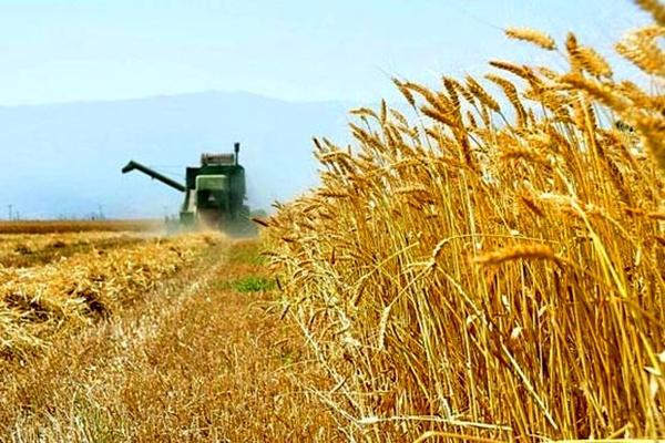 خروج بدون مجوز گندم از استان ممنوع است