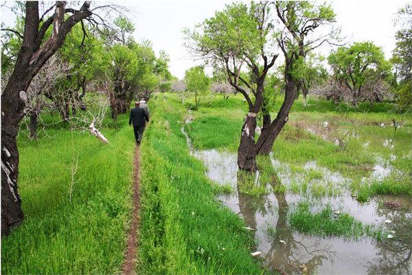 تغییر کاربری و تخریب درختان، درصدر معضلات باغستانها/ گنج گرانبهای قزوین در معرض تاراج مدعیان مدیریت شهری!