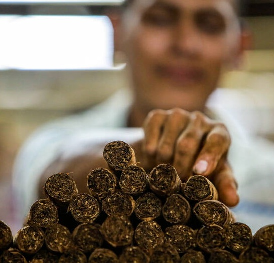 عکس/ تولید سیگار در نیکاراگوئه