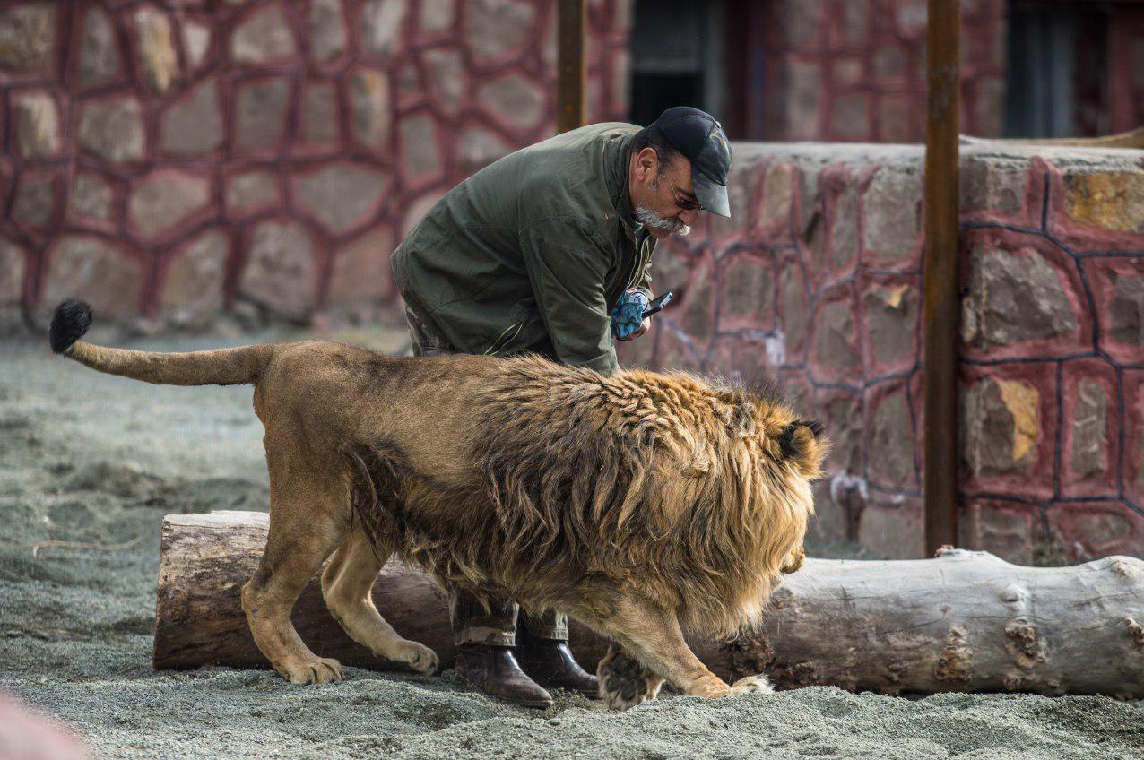 حمله شیر به مسئول دهکده طبیعت قزوین!