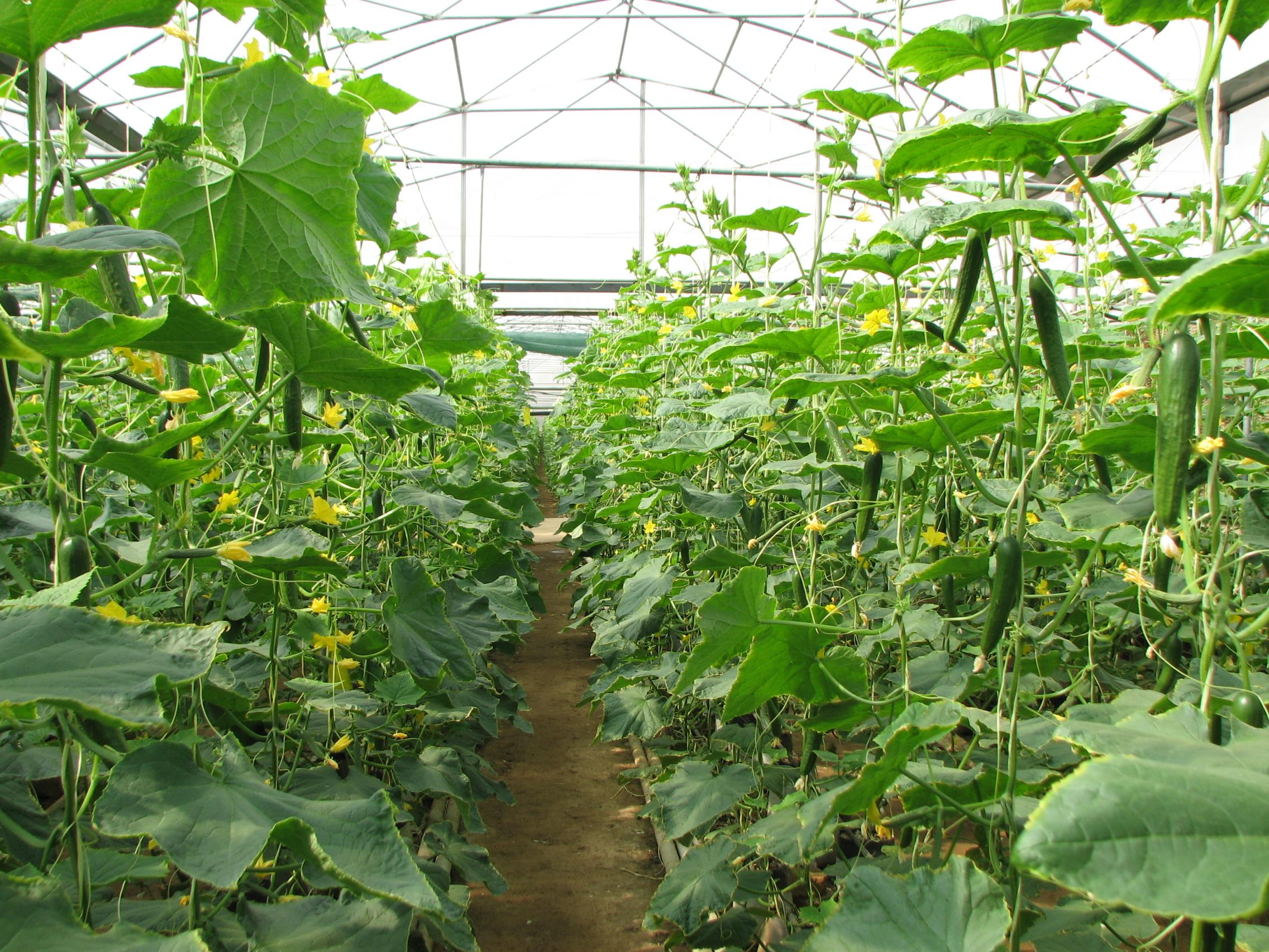۱۴۸ میلیارد تومان تسهیلات به متقاضیان بخش کشاورزی پرداخت میشود