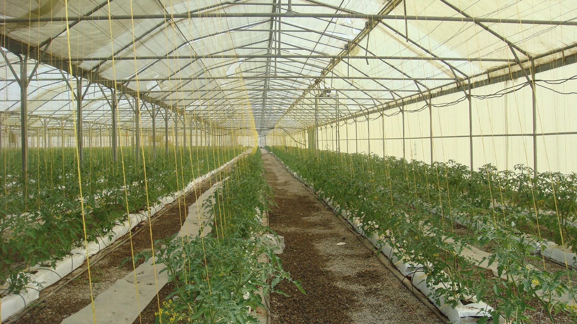 فعالیت ۳۳  واحد گلخانهای در  شهرستان آبیک