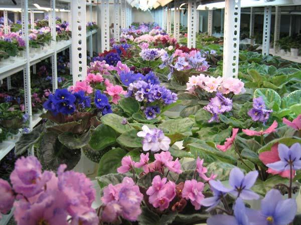 آرزو دارم گلها را میهمان خانهی همشهریانم کنم/ تحقیق با چاشنی آزمون و خطا عامل موفقیتم بود