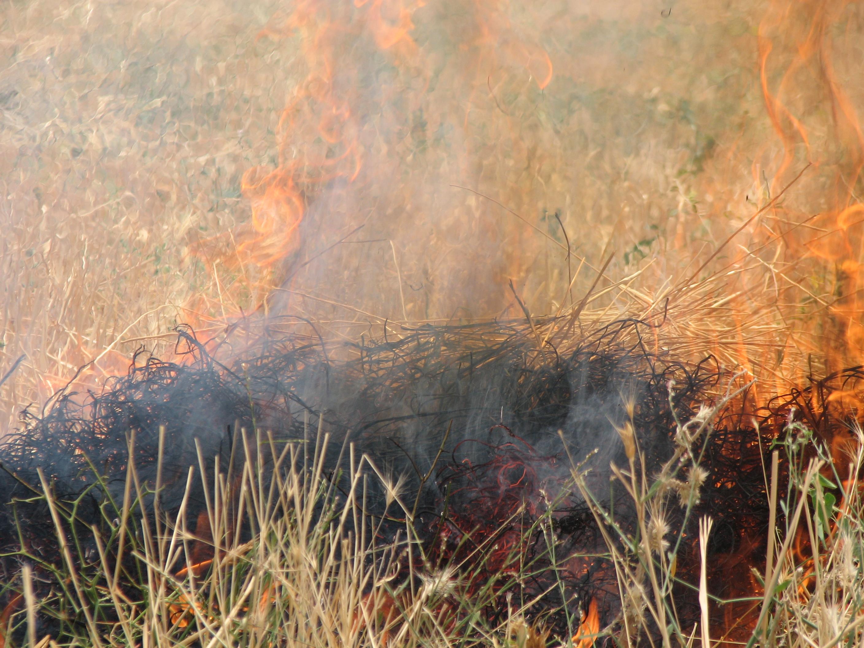 کشاورزان از آتش زدن بقایای خشک گیاهی در مزارع خودداری کنند