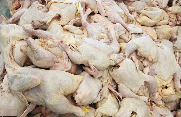۳ تن مرغ غیرقابل مصرف معدوم شد/ تشدید نظارتهای دامپزشکی در قزوین