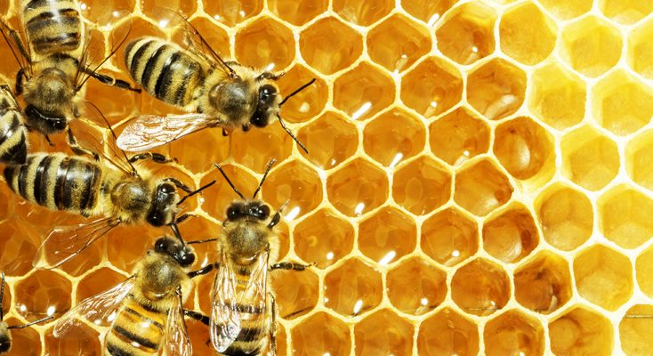 عکس/ زنبور را از نمای نزدیک ببینید