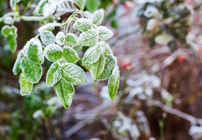 سرما و برودت هوا قزوین را فرا خواهد گرفت