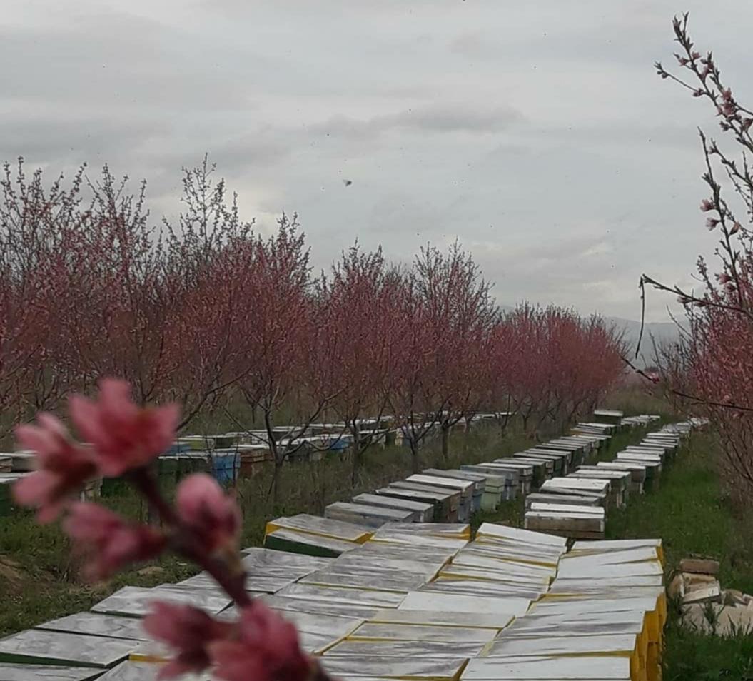 بسیج سازندگی نقطه اتکای کارآفرینان است/ از پرورش ۵ کندوی زنبور عسل به ۶۸ کندو رسیدم