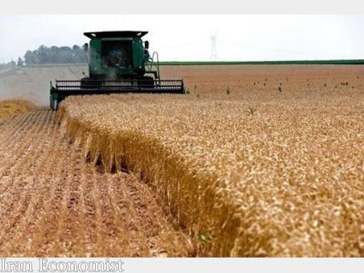 قیمت گندم هفته آینده تعیین تکلیف میشود